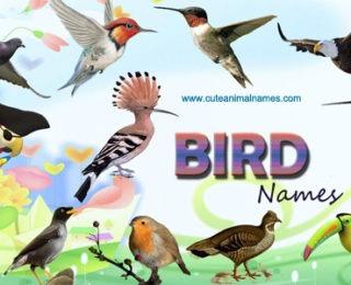 bird names cute animal names