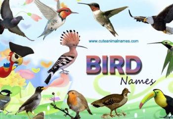 Bird Names