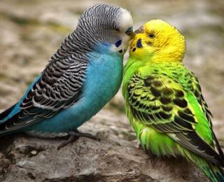 female bird names cute animal names