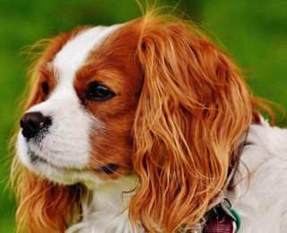 Female Dog Names that Start With the Letter C