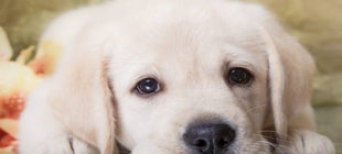 Female Dog Names that Start With the Letter F