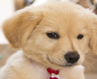 Female Dog Names that Start With the Letter G