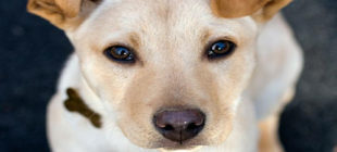 Female Dog Names that Start With the Letter Z