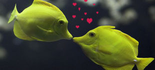 Female Fish Names