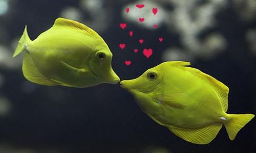 Female fish names cute animal names for Cute names for fish