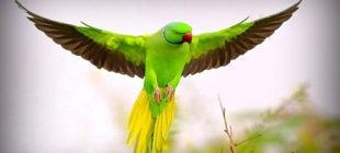 Female Parrot Names