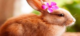 Female Rabbit Names