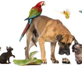 List of Types of Pets