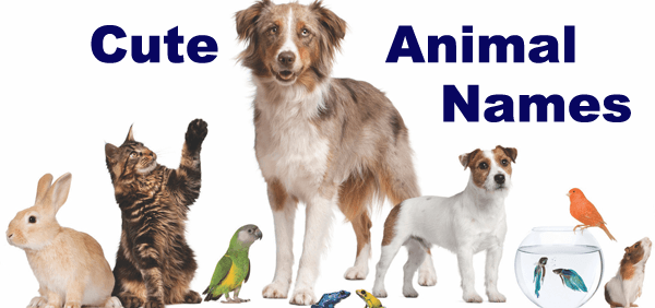 Cute and cool dog cat bird fish rabbit pet names for Cute names for fish