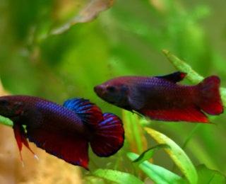 Male Fish Names