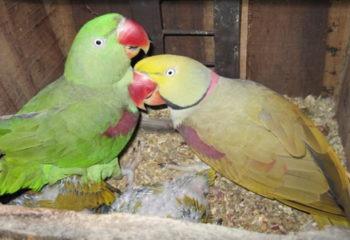 Male Parrot Names