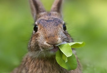 Male Rabbit Names