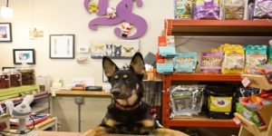 The Best 50 Pet Stores in New York