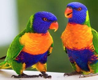 The Most Beautiful Bird Names