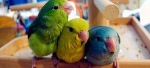 Types of Pet Birds