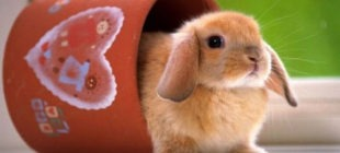 100 Most Popular Rabbit Names
