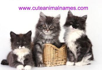 unique female cat names | cute animal names
