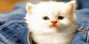 Female Cat Names that Start With the Letter D