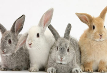 Rabbit Names Archives - cute animal namescute animal names