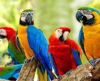Parrot Names