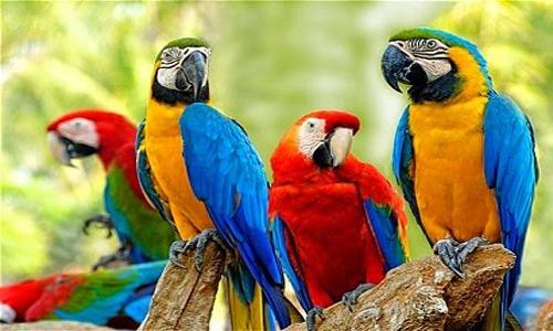 Parrot Names | cute animal names