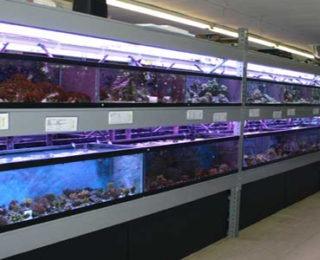 monster aquarium flushing new york