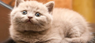 Are male cats more aggressive