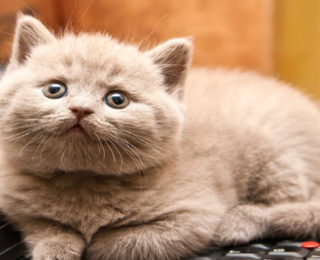 Unique Female Cat Names