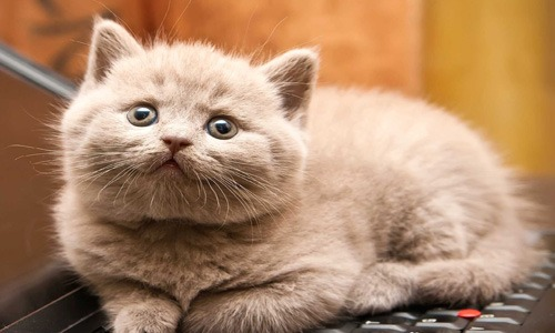 9 silly cat names i039d like to use someday i  128 pm 17 sep