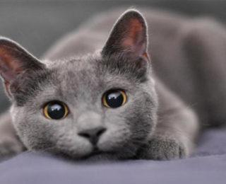 Unique Male Cat Names -cute animal names