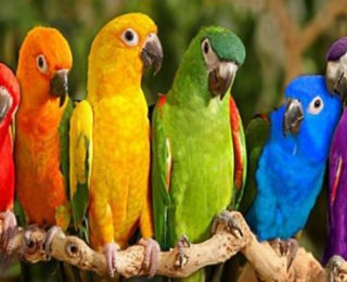 The Most Beautiful and Popular Parrot Names