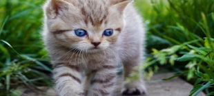 Female Cat Names that Start With the Letter K
