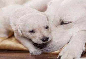 Female Dog Names that Start With the Letter V