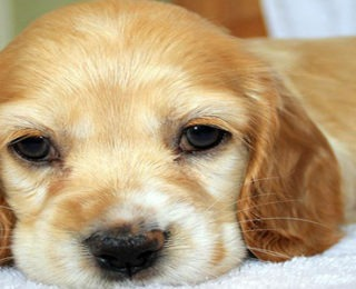 Female Dog Names that Start With the Letter X
