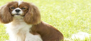 Female Dog Names that Start With the Letter Y