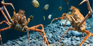 Crab Names