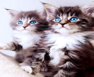 Female Cat Names that Start With the Letter O