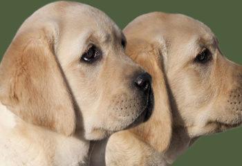Male Dog Names