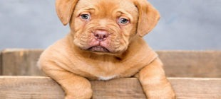 Male Dog Names that Start With the Letter D