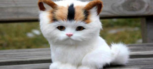 Female Cat Names that Start With the Letter Q