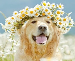 Exotic Female Dog Names -cute animal names