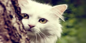 Female Cat Names that Start With the Letter T
