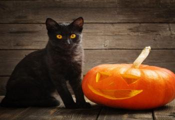 Halloween Cat Names