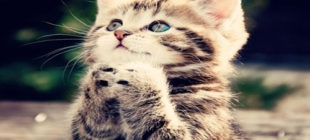 Female Cat Names that Start With the Letter U