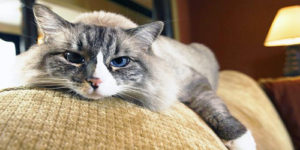 Life Lessons We Can Learn From Cats