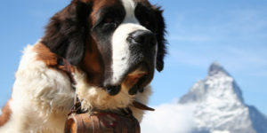 Male Big Dog Names