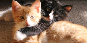 Some Behaviors That Cats Do Not Like