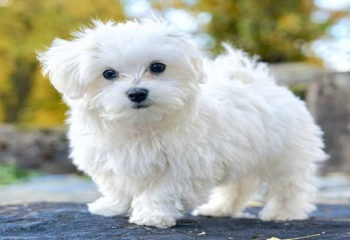 Dog Breeds That Have Little Hair