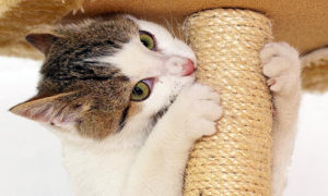 my-cat-is-scratching-furniture