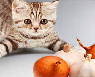 What Can My Cat Not Eat? Toxic Food For Cats